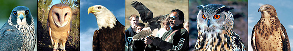 birds of prey images